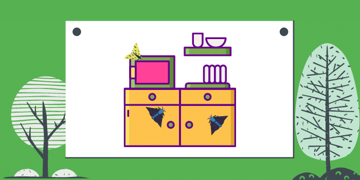 Pantry Moths In The Kitchen? How Can You Get Rid Of Them?
